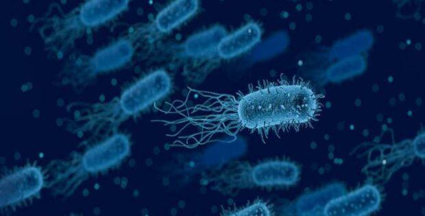 Apa Itu Bakteri?
