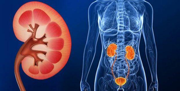 Bahaya Penyakit Gagal Ginjal