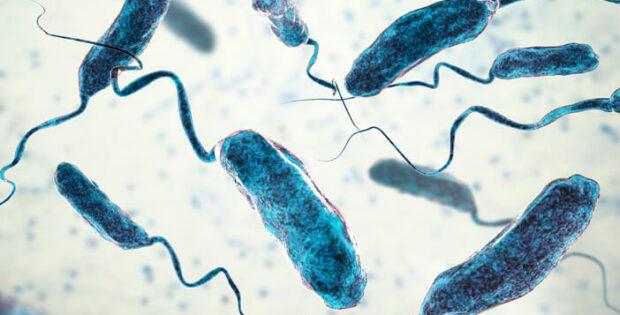 Kenali Penyakit Kolera